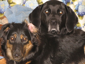 """Becket and his little """"sister"""" Eithne Louise--polar opposites (not unlike Mummy and Daddy)!"""